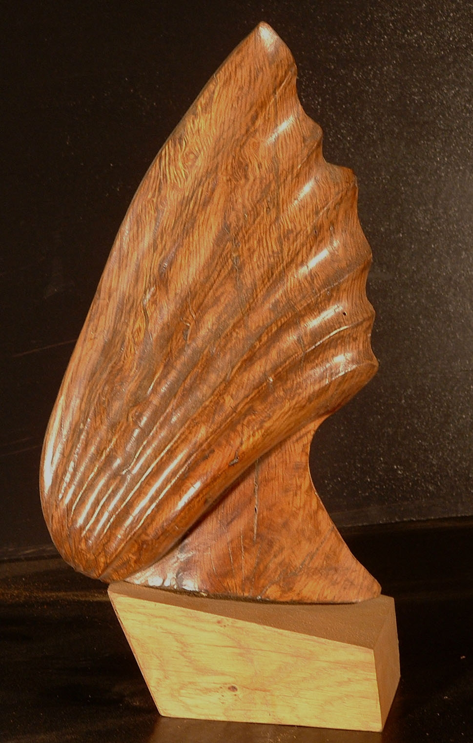 Coquille 2000 40x20