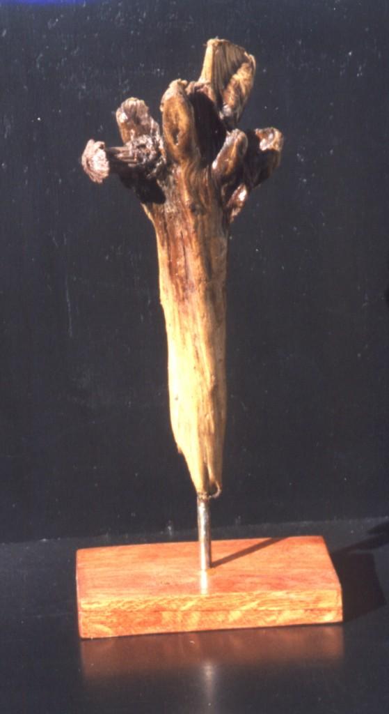 Fleur de mer  2001  30x15